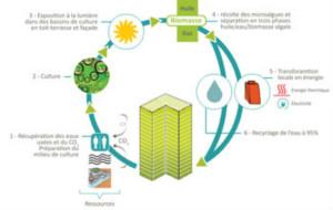 Le cycle de valorisation des déchets par les photobioréacteurs