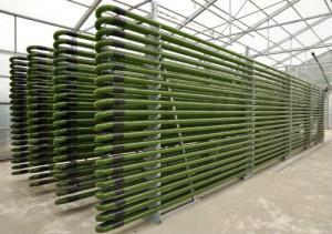 La biomasse pourrait s'imposer comme une des principales sources d'énergie