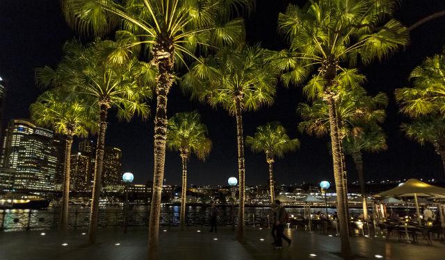 © ERCO GmbH, Palm Trees, Circular Quay, Sydney / Australie – Maîtrise d'ouvrage :Sydney Harbour Foreshore Authority, Sydney / Australie – Photographie :Jackie Chan, Sydney / Australie – Produits : Tesis